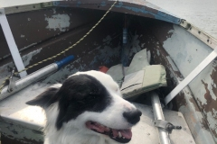 Lilly enjoying the ride